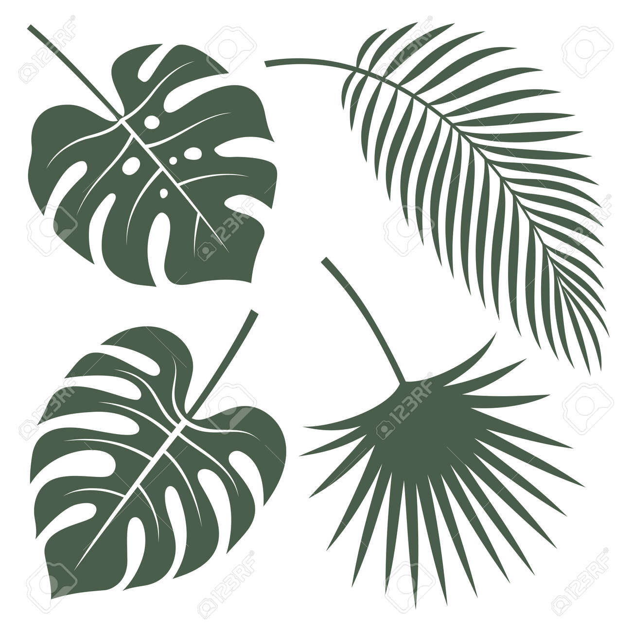Silhouettes vector of tropical leaves. Monstera, coconut palm and fan palm. - 96943231