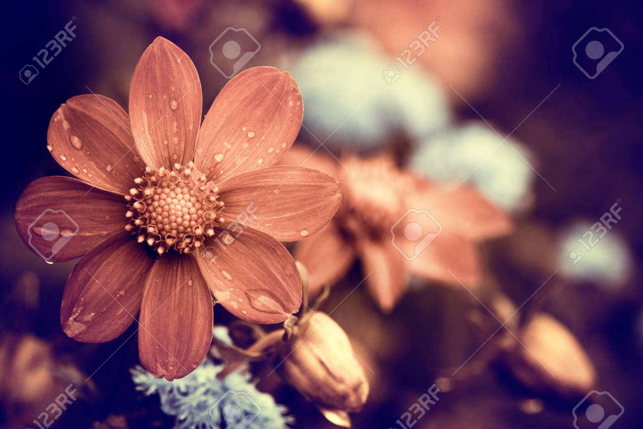 rainy day flower - 30852180
