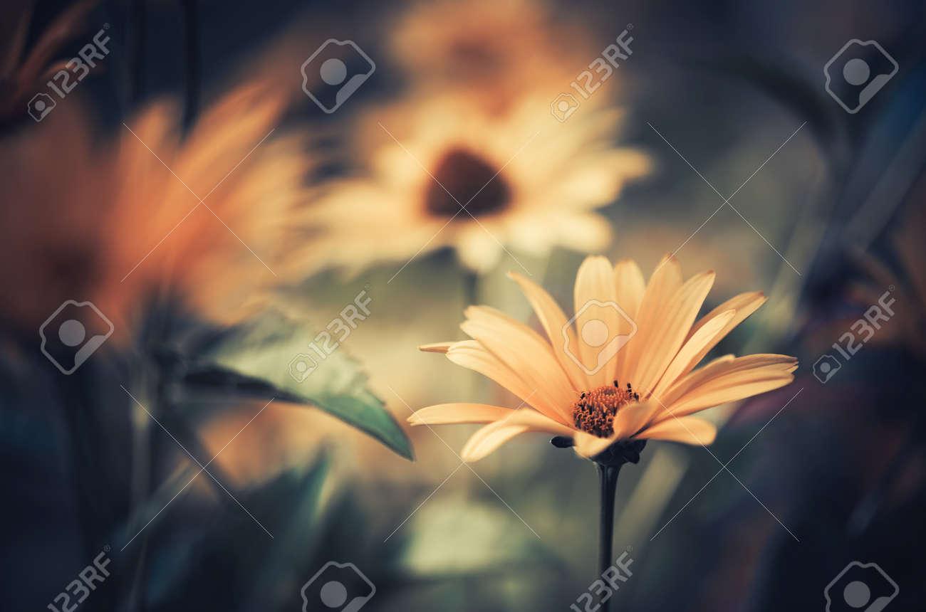 summer sunset flower - 30902764