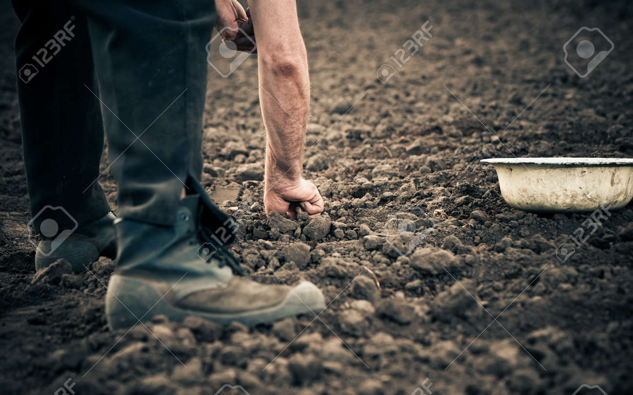 farmer planting onion seeds in the ground - 32367610