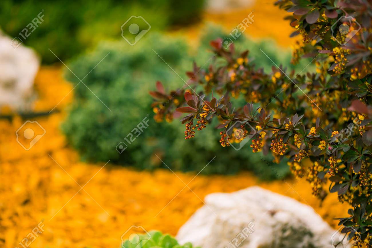 fresh spring colorful bush - 122576617