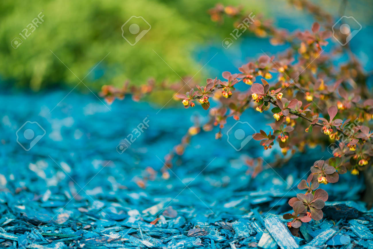 colorful natural decoration - 122576620