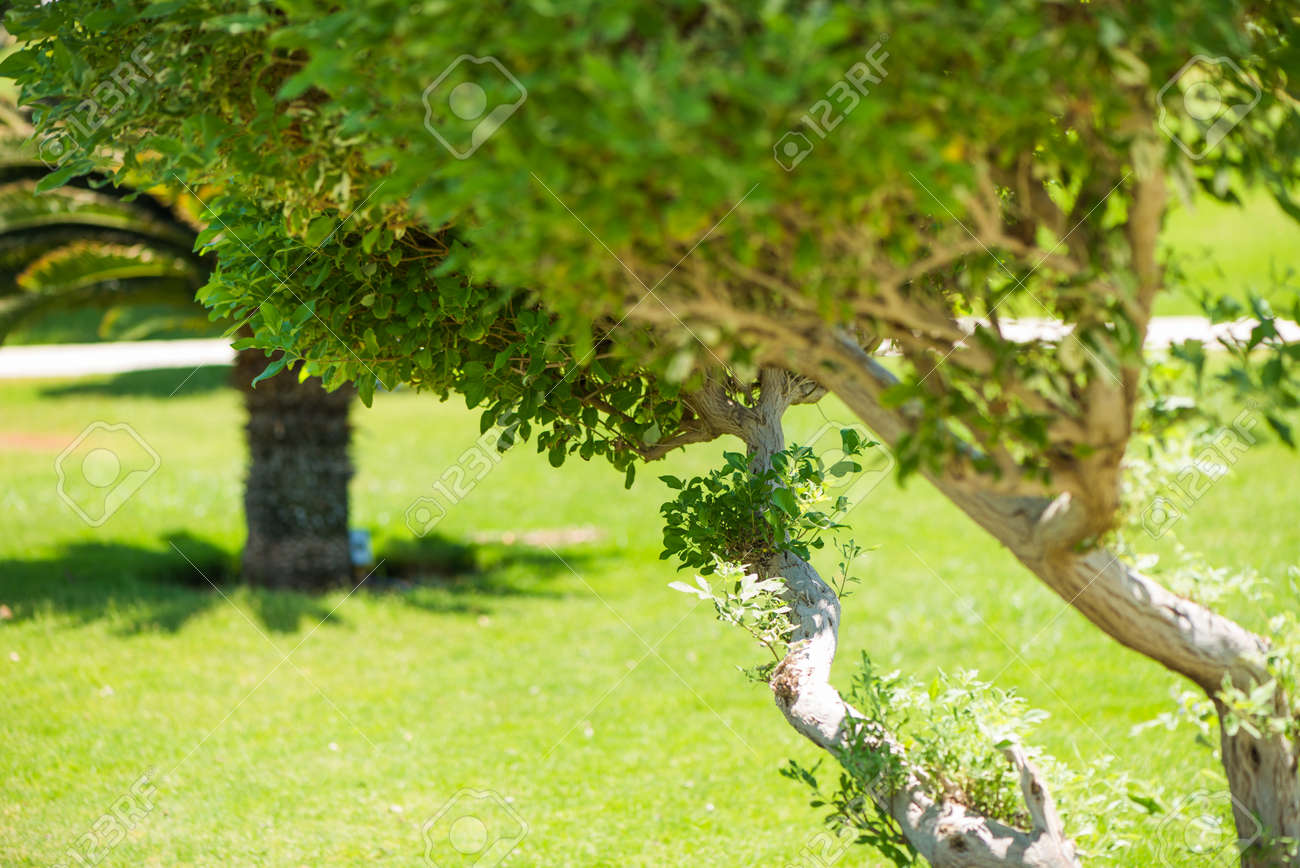 fresh green decorative park trees - 127951820