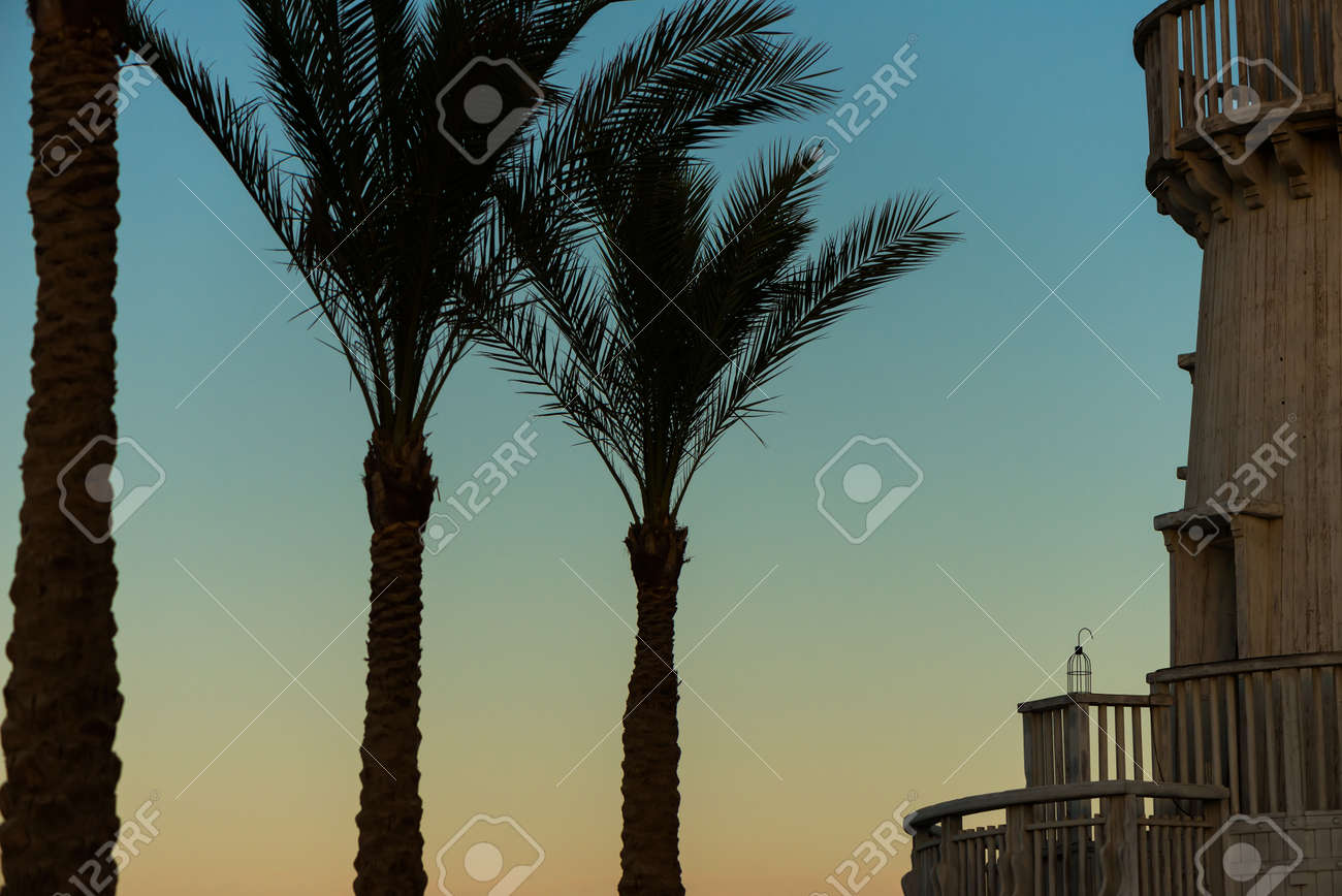 palm trees and vintage wooden lighthouse - 127951824