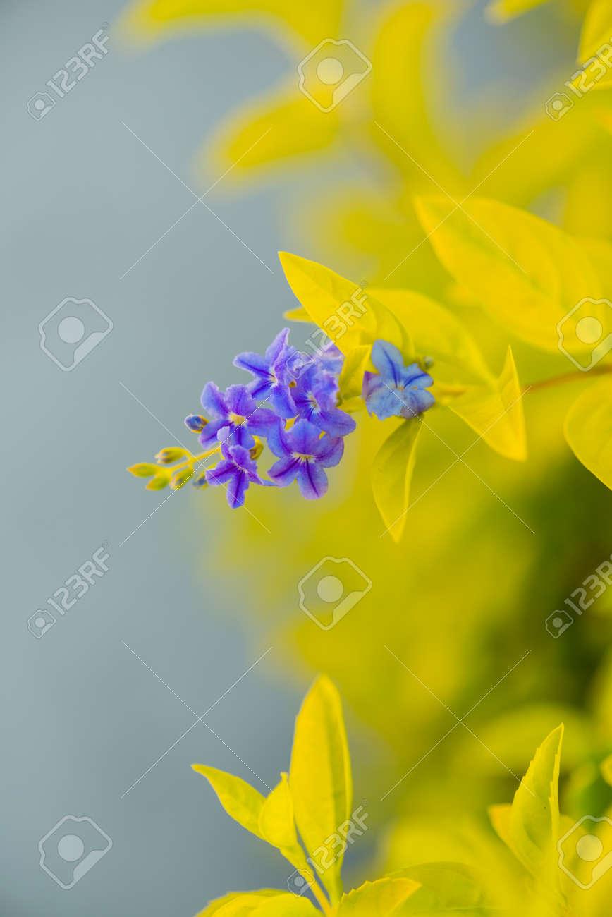 beautiful violet tropical flowers - 127951833