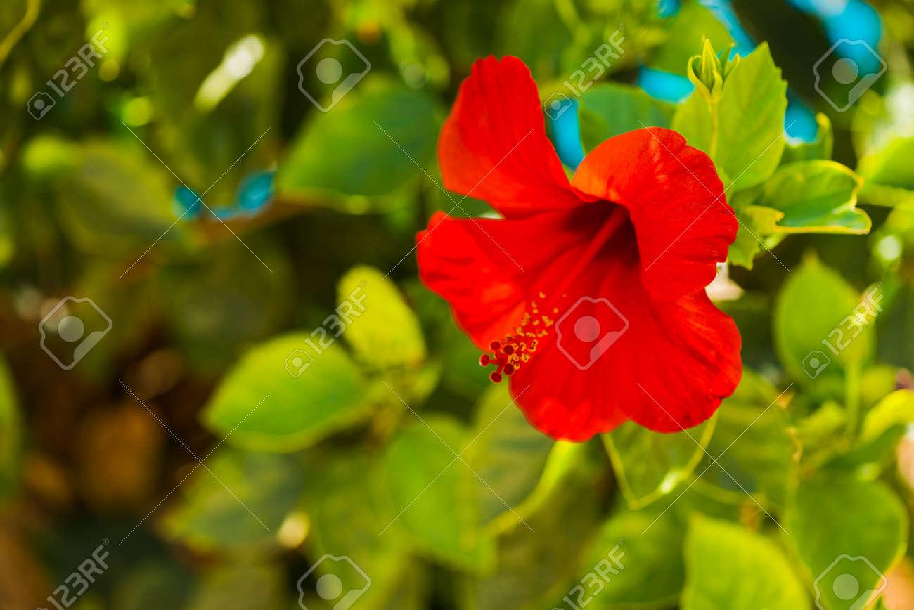 exotic summer season flower - 127951842