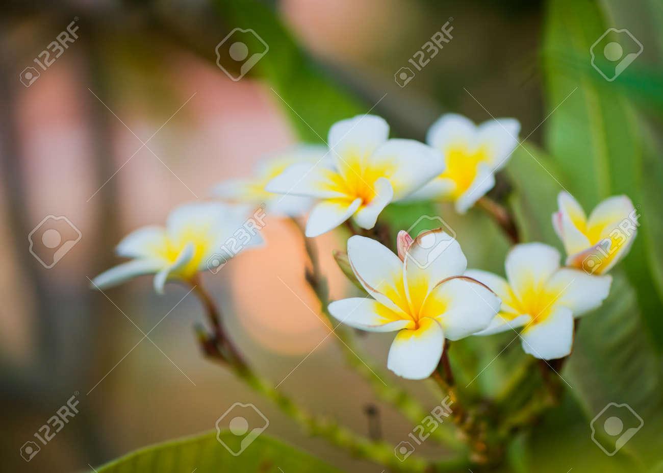 beautiful exotic flowers in garden sunset light - 127951876
