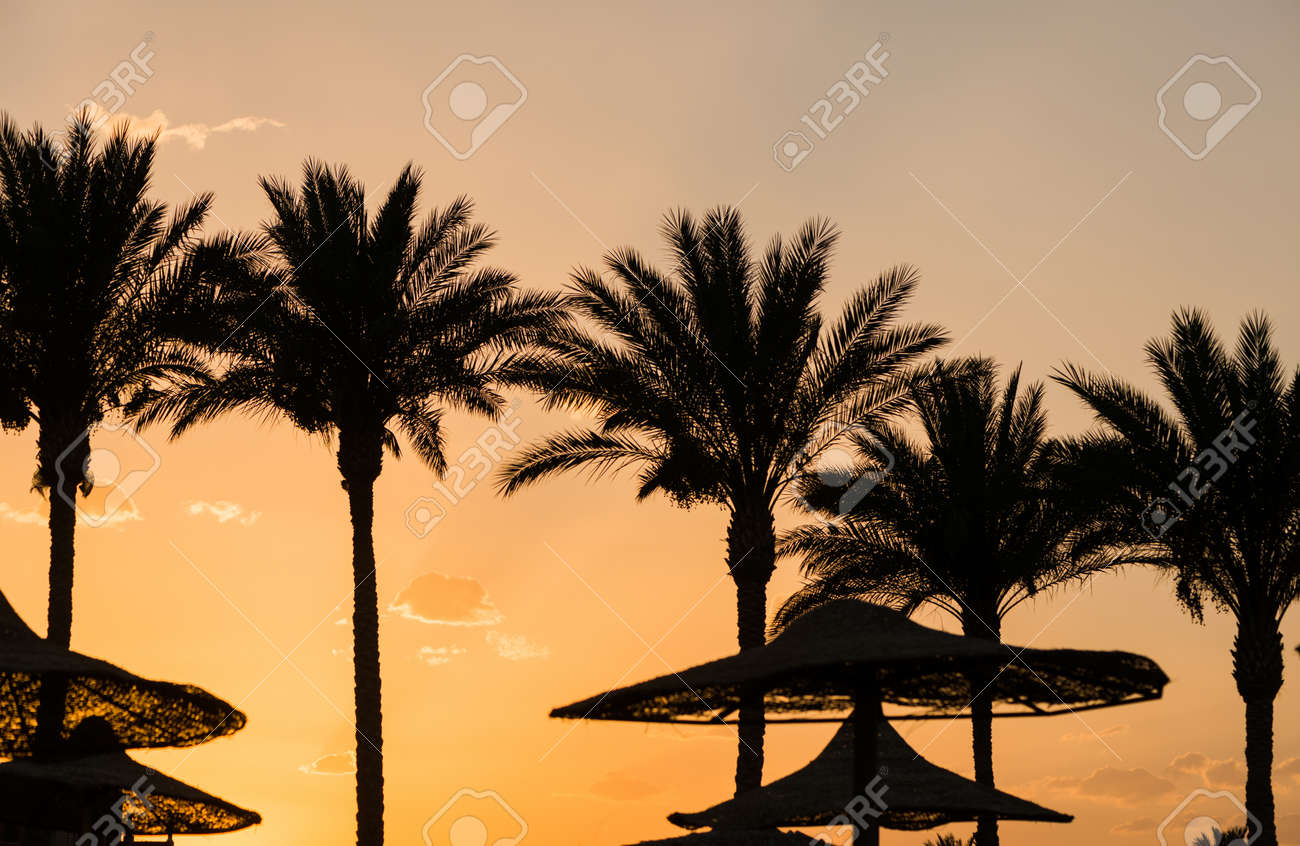 palm trees silhouettes at summer sunset beach - 127951879