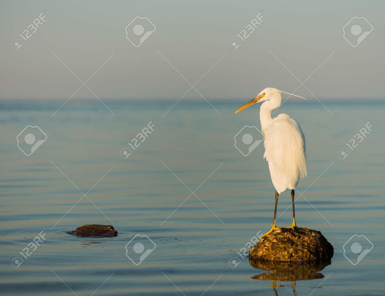 wild white brird on a stone at seascape sunset - 127951885