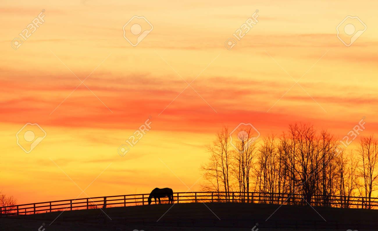 Pasture - 15541505