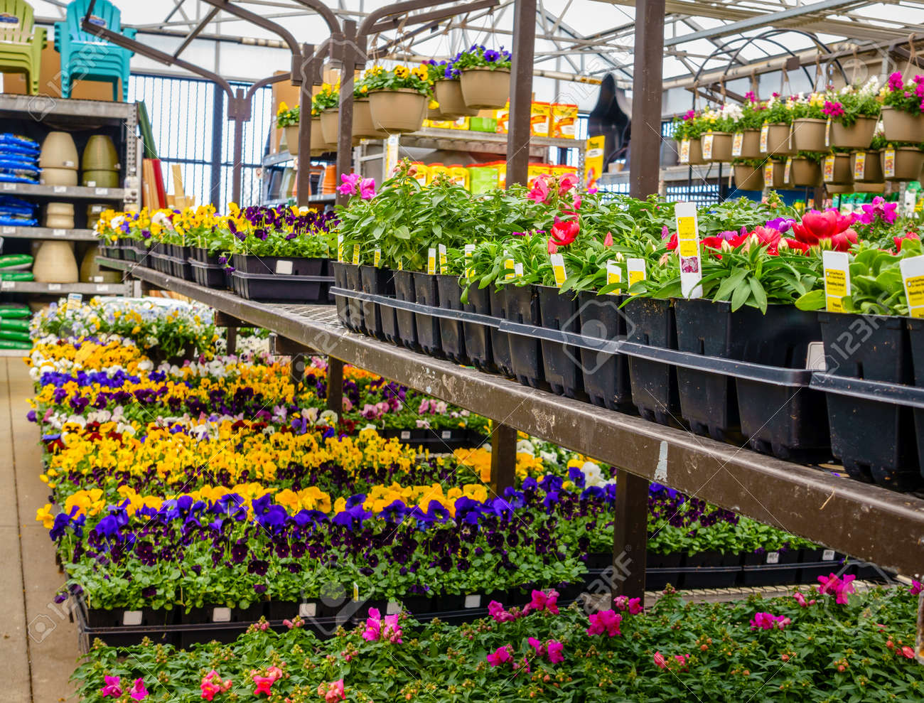 Potted flowers and plants on display at a home improvement store potted flowers and plants on display at a home improvement store in spring stock photo mightylinksfo Image collections