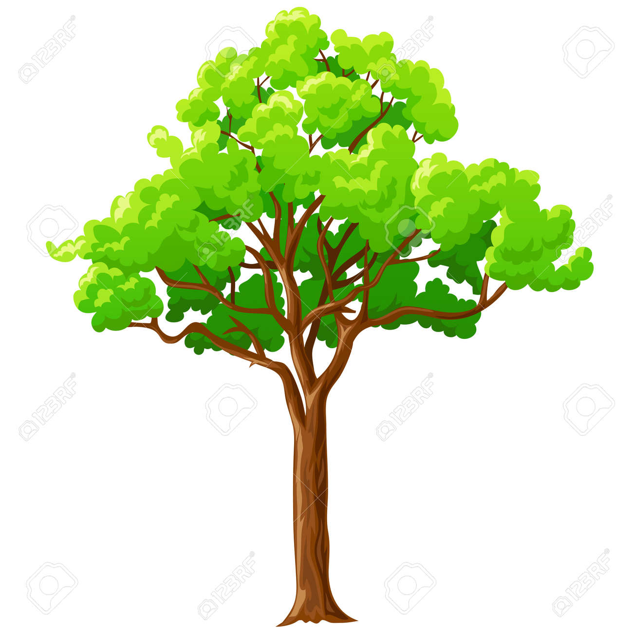 Cartoon big green tree with branches isolated on white background. Vector illustration. - 11536165
