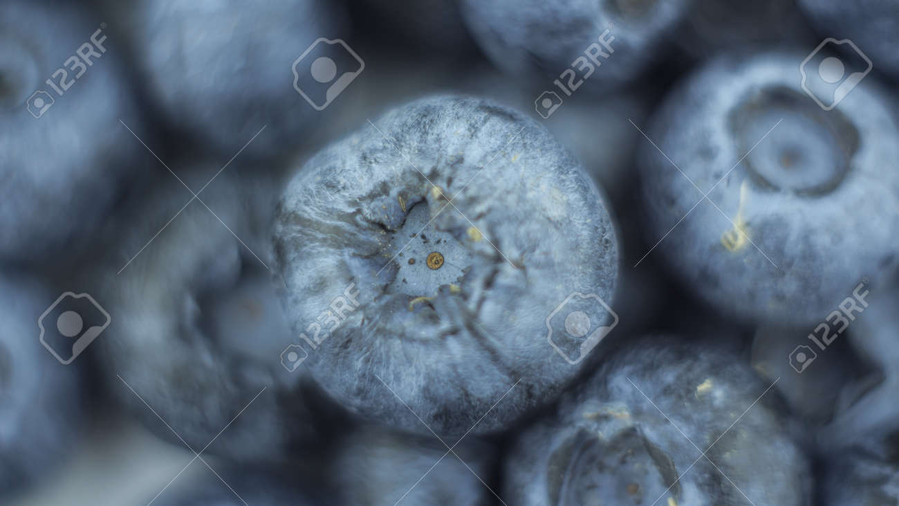 Close-up of ripe juicy blueberries on a white background. - 152883804