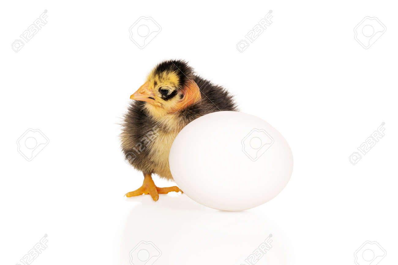 ugly chick by the egg - 171754911