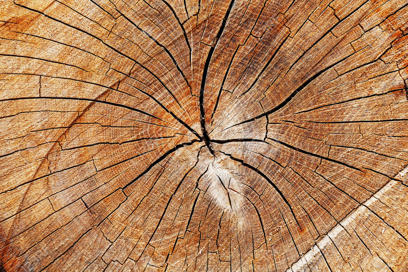 The stump of a felled tree, a cut of the trunk with annual rings and cracks, the texture of the sawed stump. Full screen - 125841638