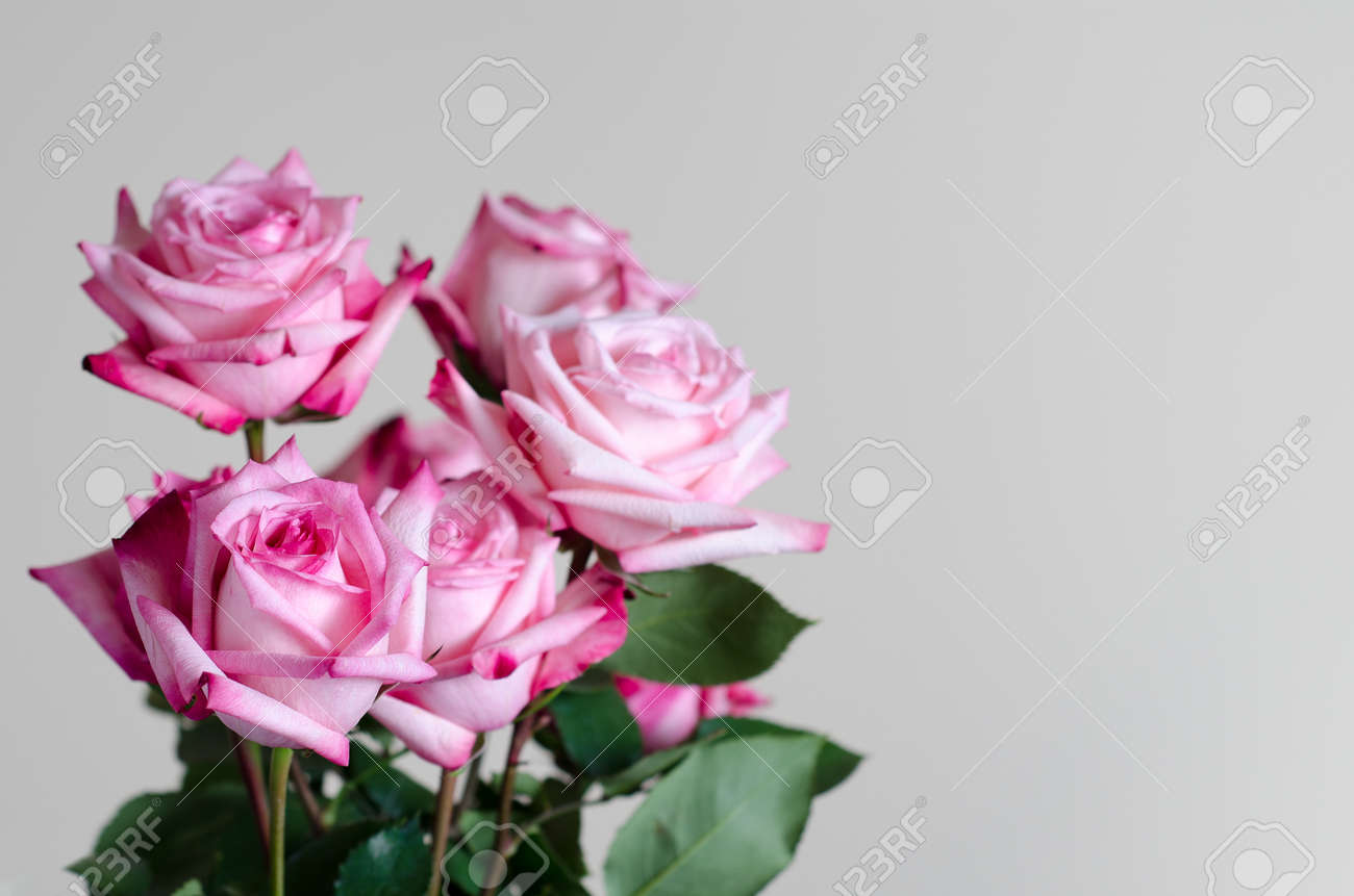 Bouquet of fresh pink roses on uniform background stock photo bouquet of fresh pink roses on uniform background stock photo 74739958 izmirmasajfo