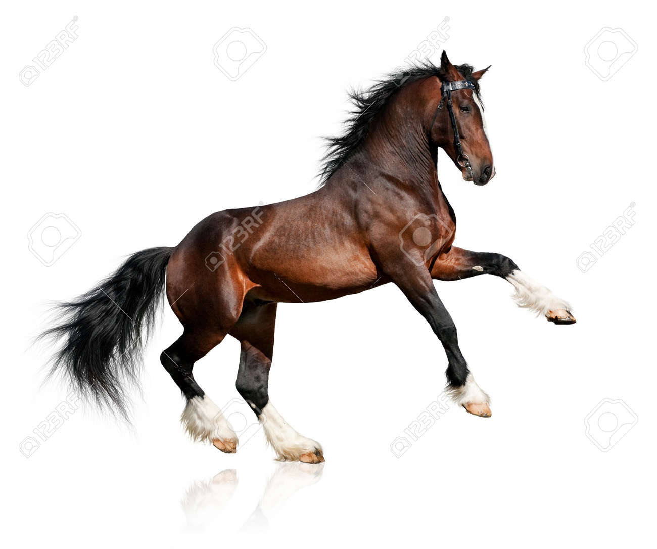 White Horse Stock Photos. Royalty Free White Horse Images