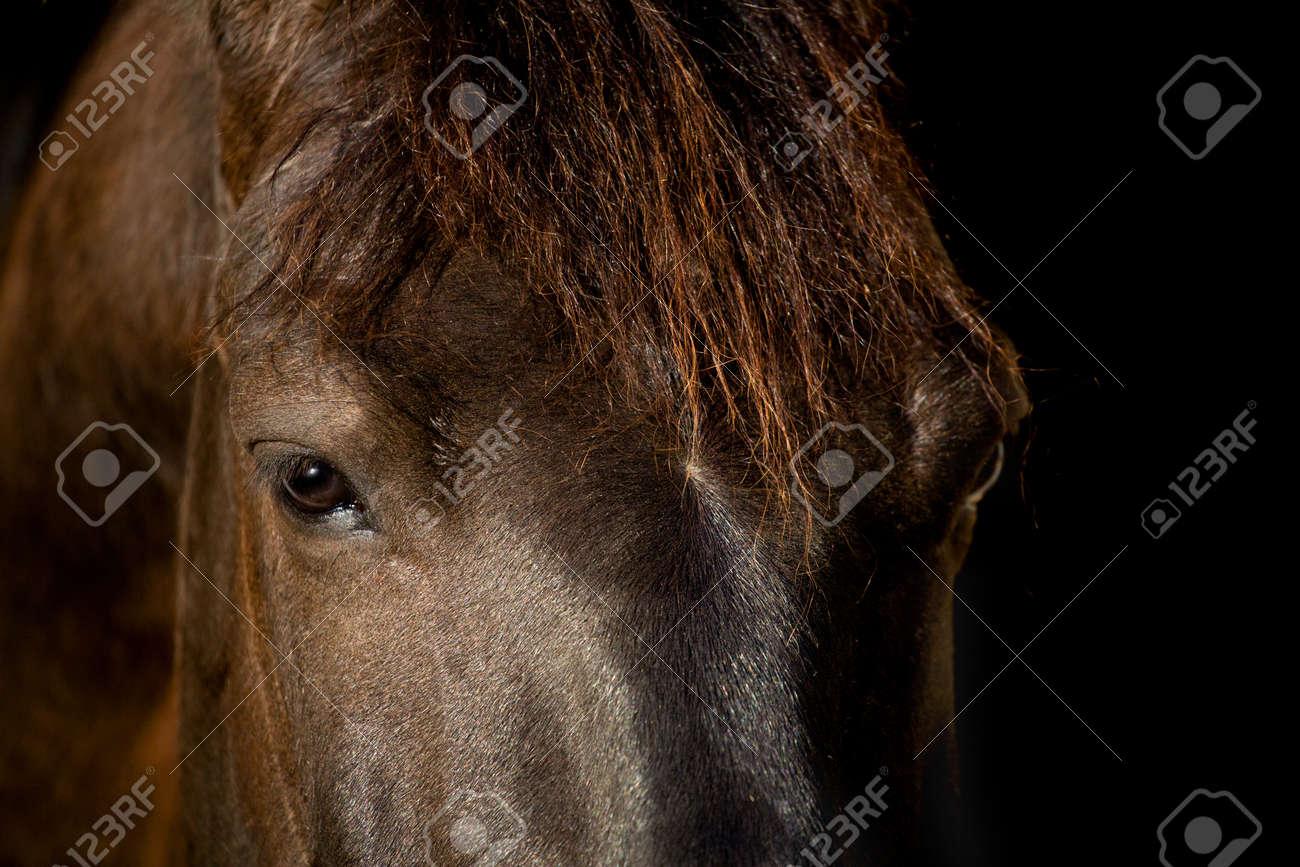 Horse head isolated on black background Stock Photo - 13074221