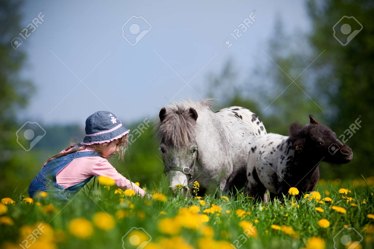 Child with small horses in the field. Stock Photo - 13247942