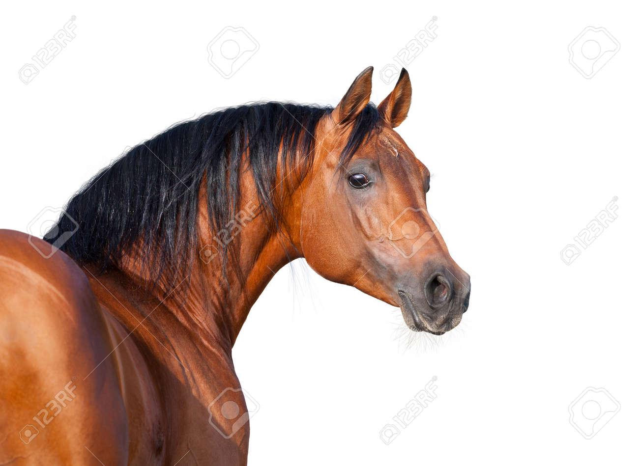 image cheval sur fond blanc