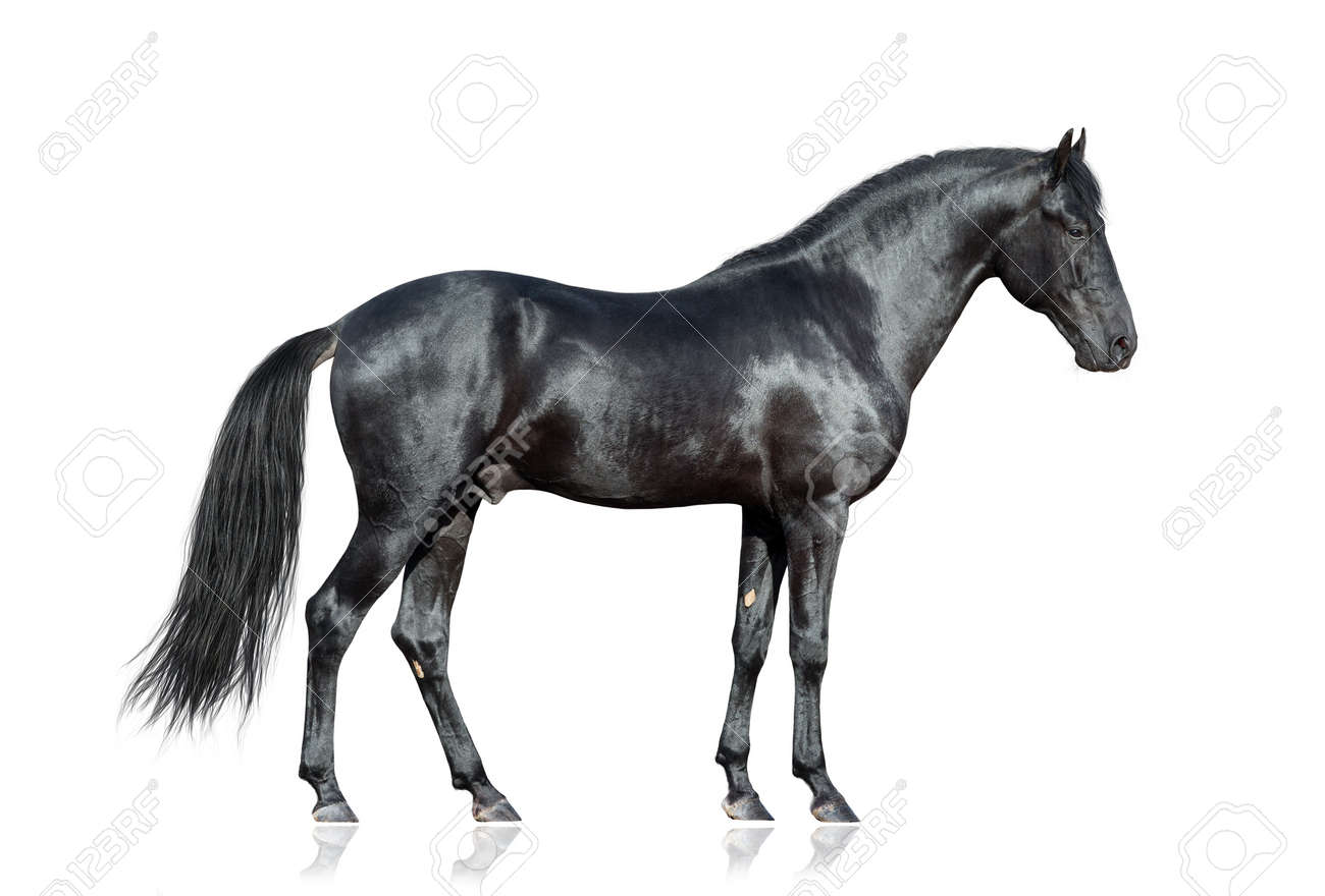 black horse stock photos & pictures. royalty free black horse