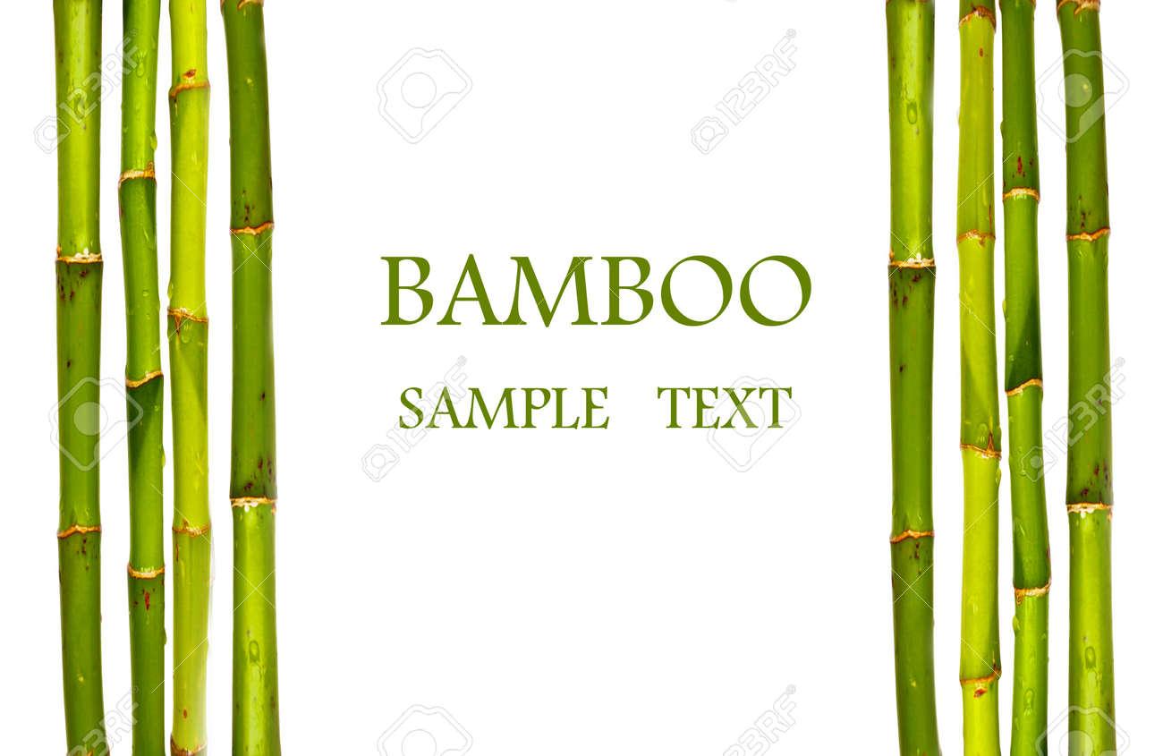 Palos De Bambu Aislados Fotos Retratos Imagenes Y Fotografia De - Palos-de-bambu