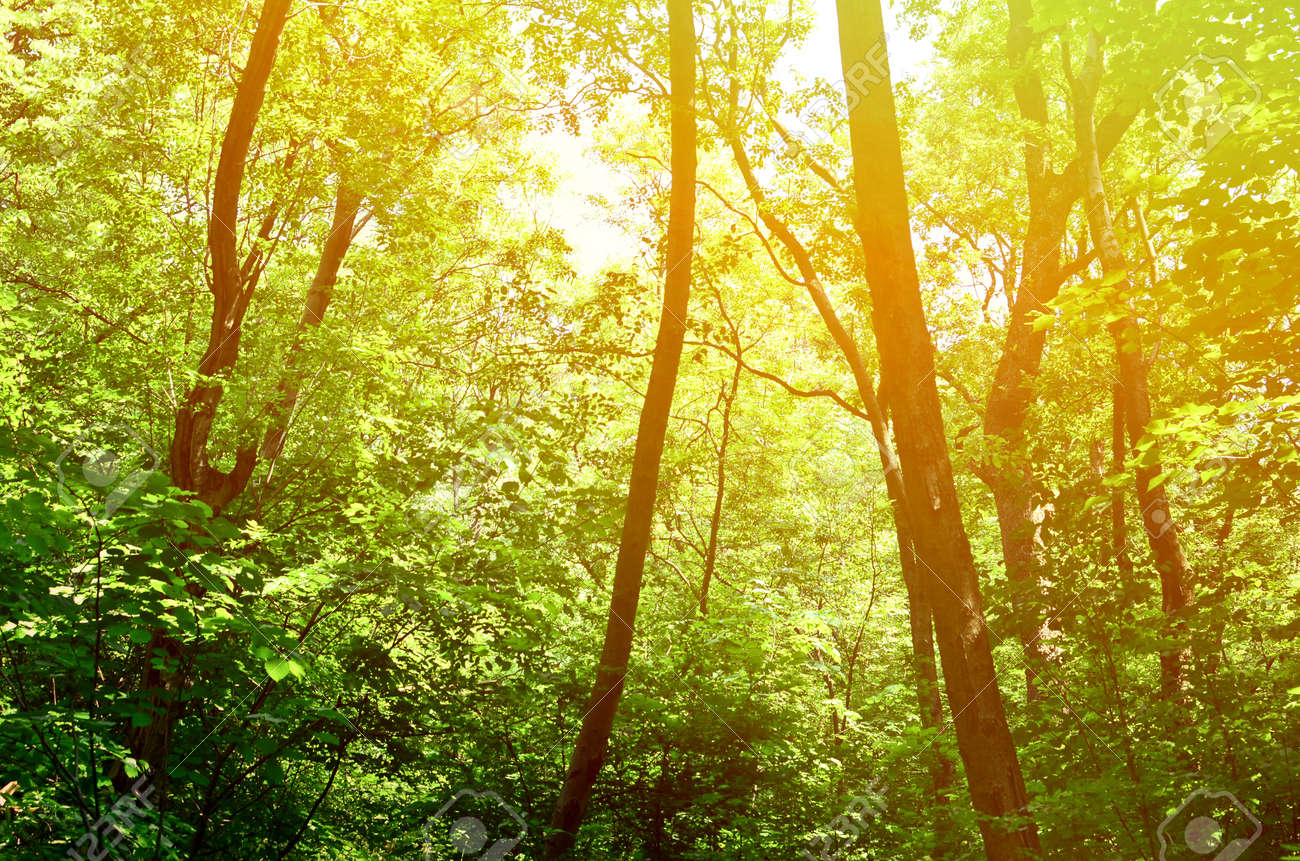 Beautiful Green Forest Background Stock Photo Picture And Royalty
