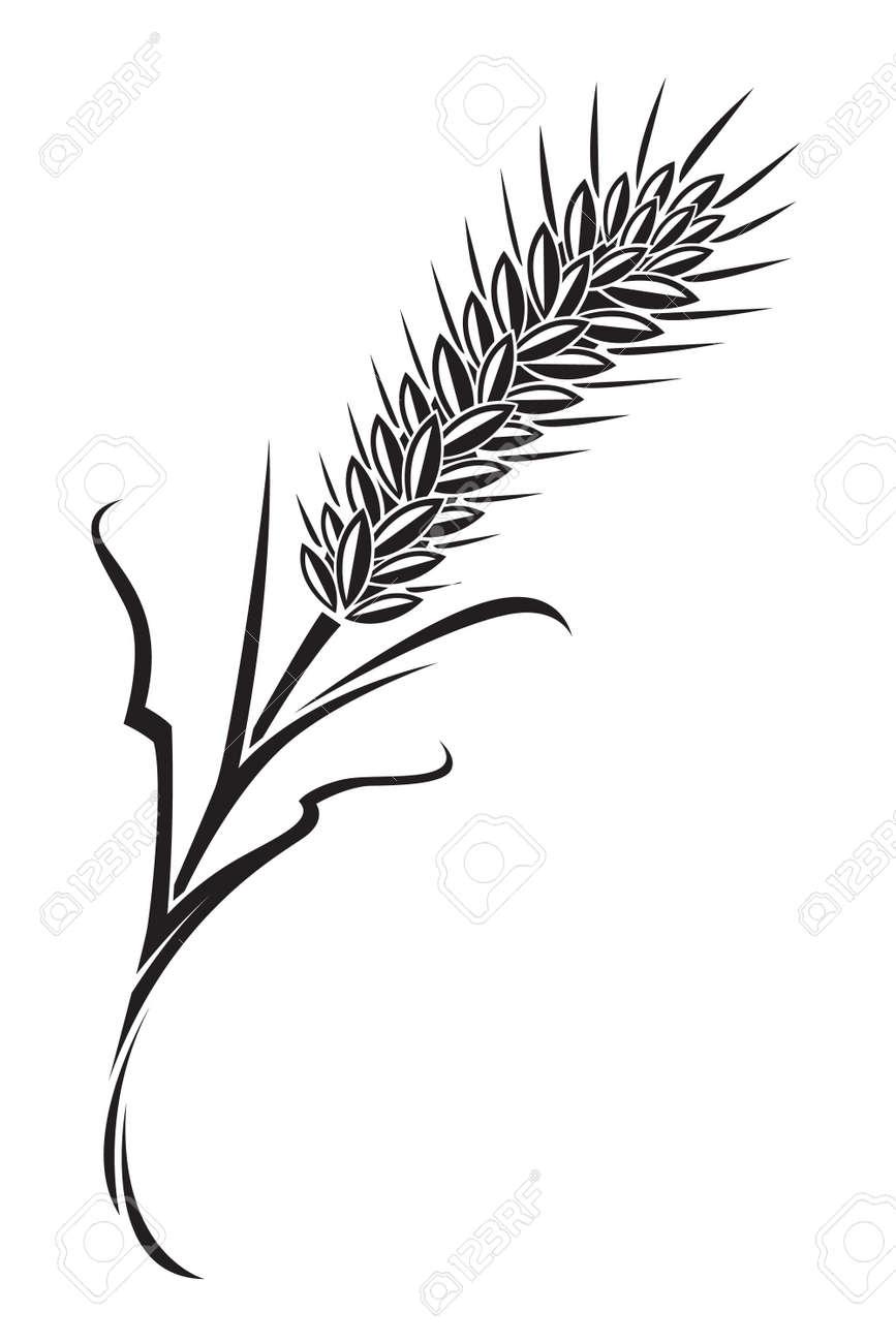 wheat Stock Vector - 11650392