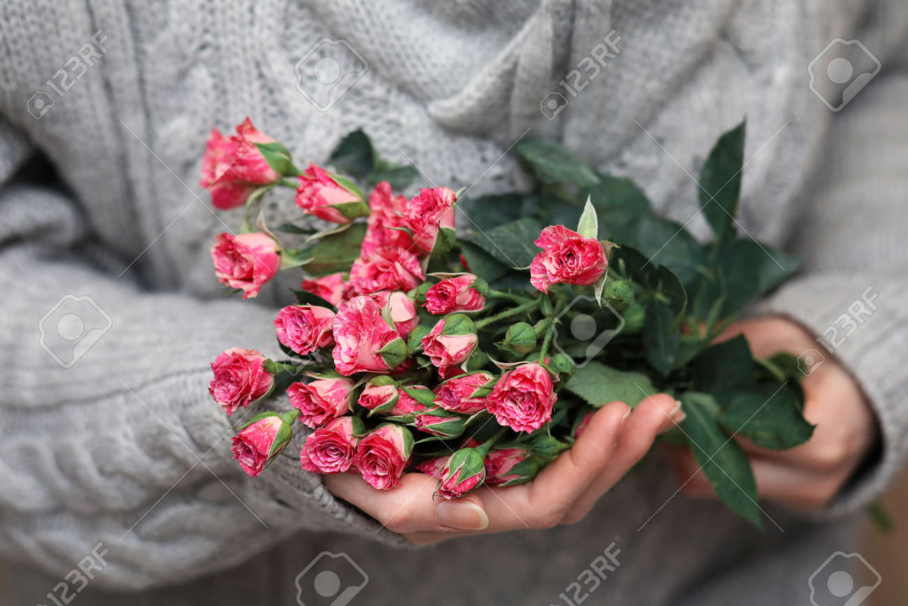 Bouquet Of Bush Of Roses In Female Hands On A Background Of Knitted ...