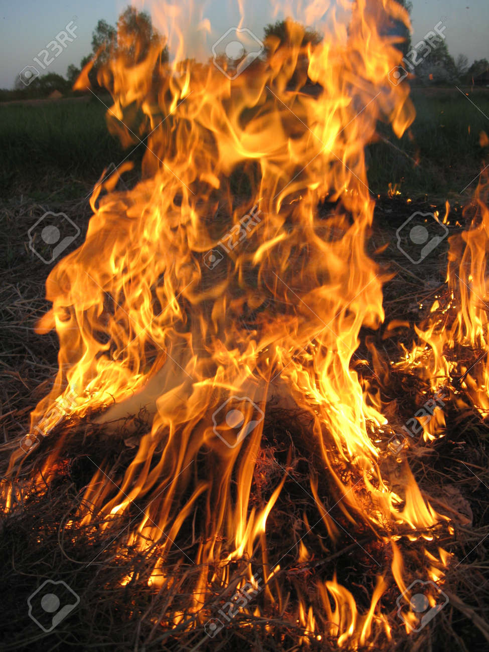 body of flame inflaming in a forest Stock Photo - 13593823