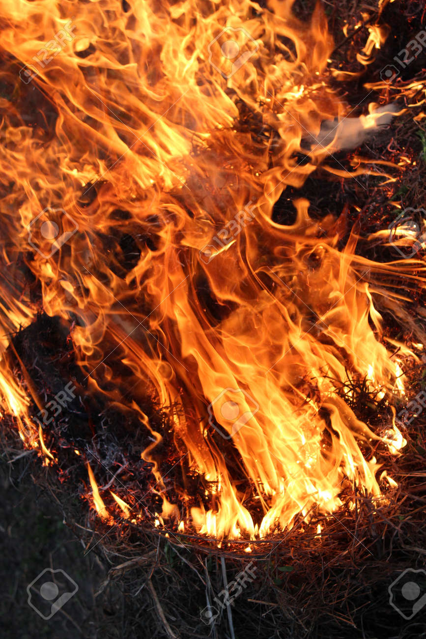 body of flame inflaming in a forest Stock Photo - 19726876