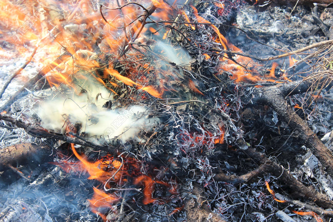 body of flame inflaming in the field Stock Photo - 22161306