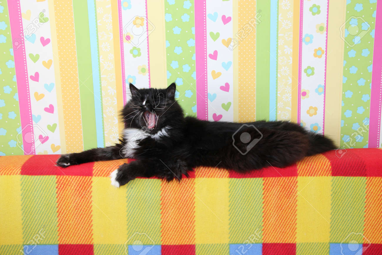 Cat Yawning Lazy Black Cat Laying On Colored Back Of Sofa And