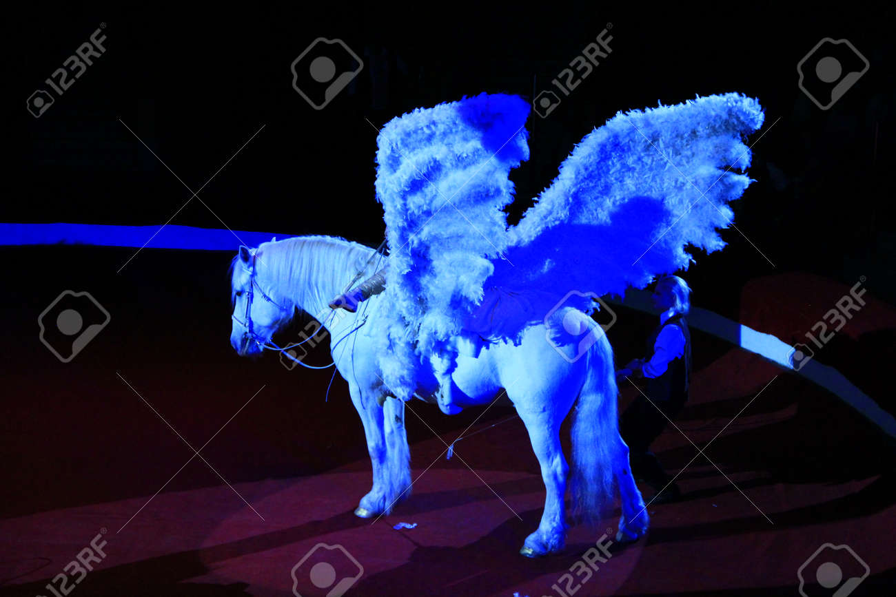 White Horse With Wings Performing In Circus Beautiful Pegasus Stock Photo Picture And Royalty Free Image Image 144270921