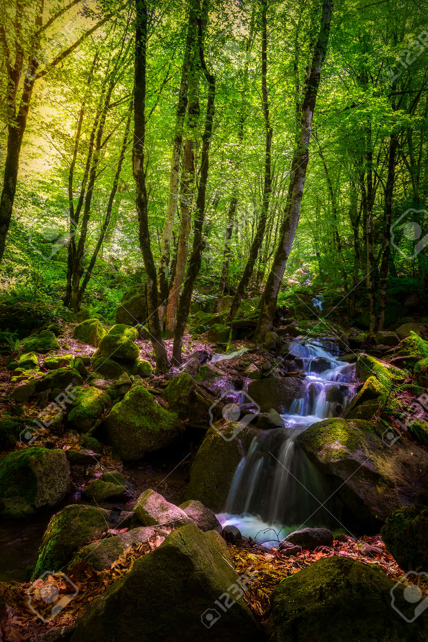 Mountain waterfall in spring forest - 169048959