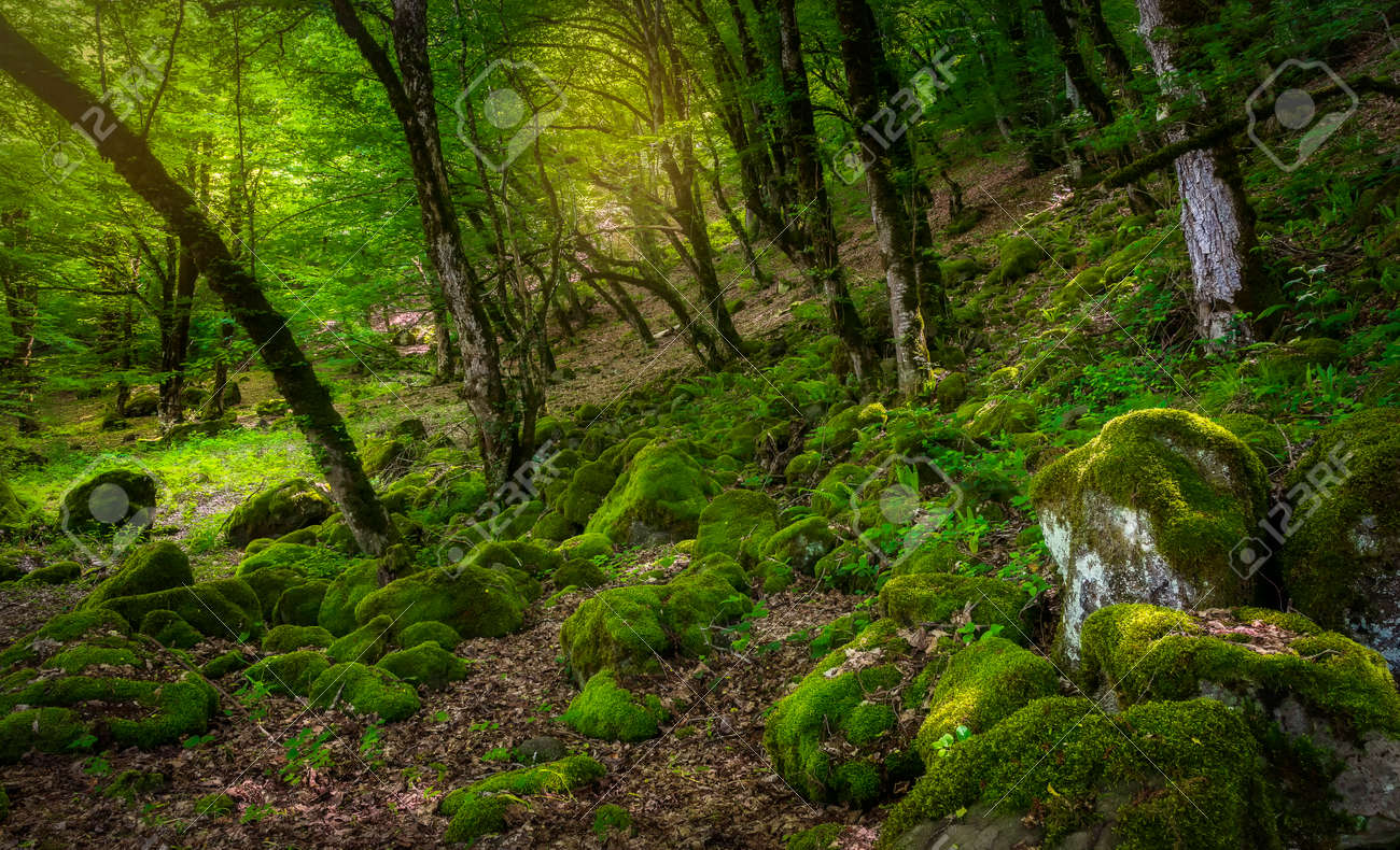 Many stones covered with moss lying in the forest - 169048968