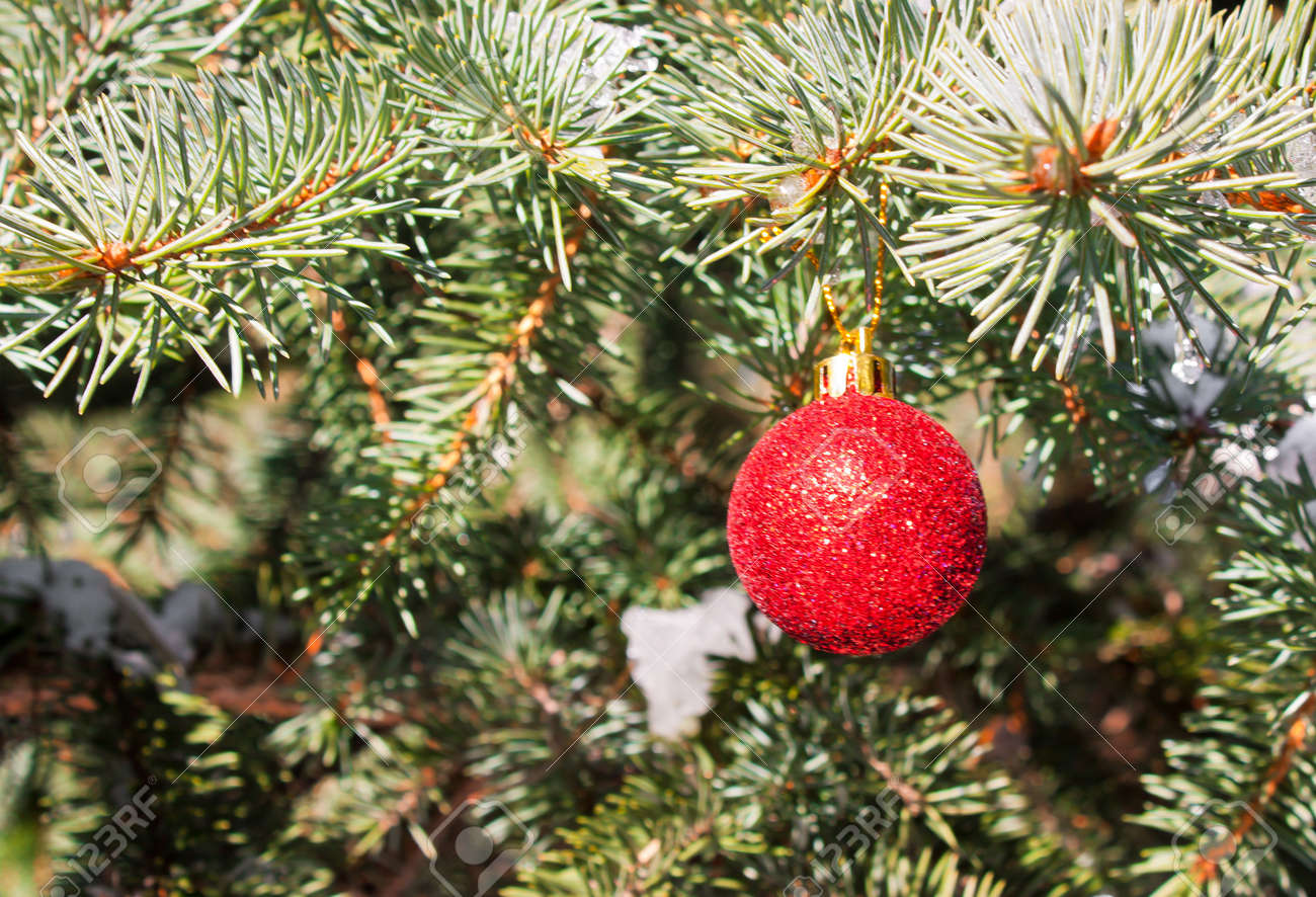 christmas toy on a branch of an evergreen tree outdoors concept of winter holiday - An Evergreen Christmas