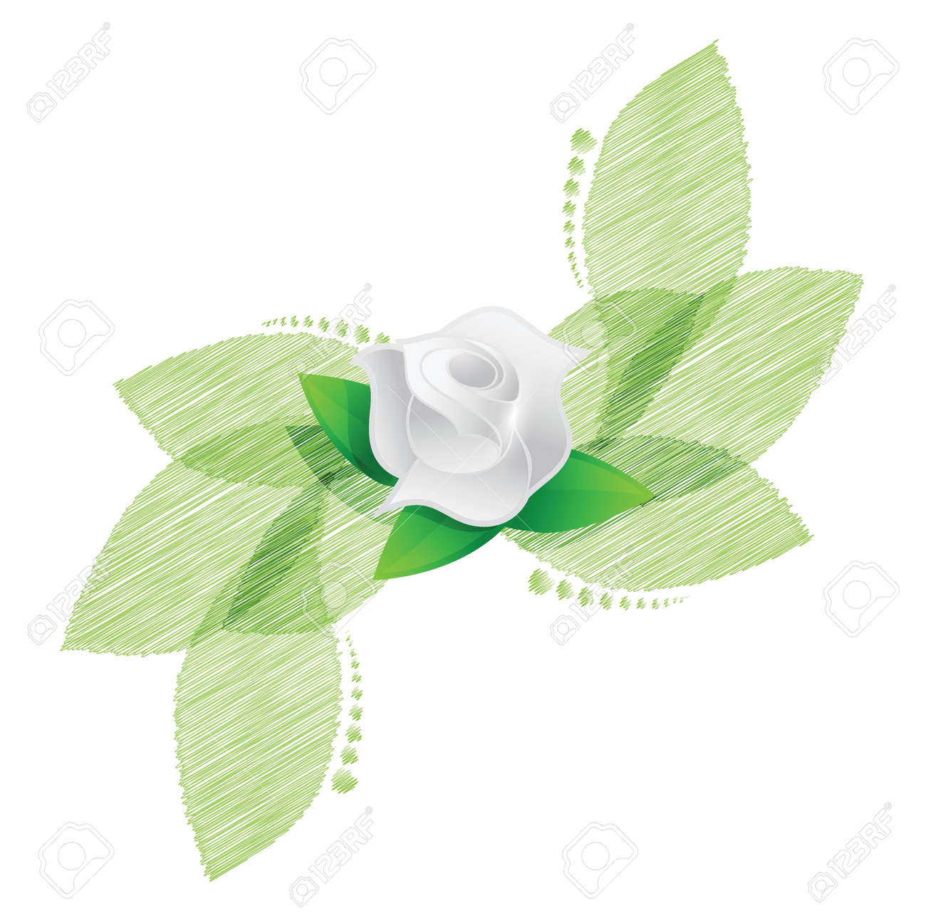 rose over green leaves illustration design over a white background Stock Vector - 20151956