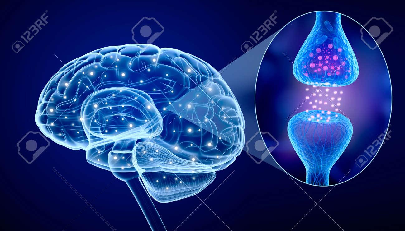 Human brain and Active receptor Stock Photo - 44565298