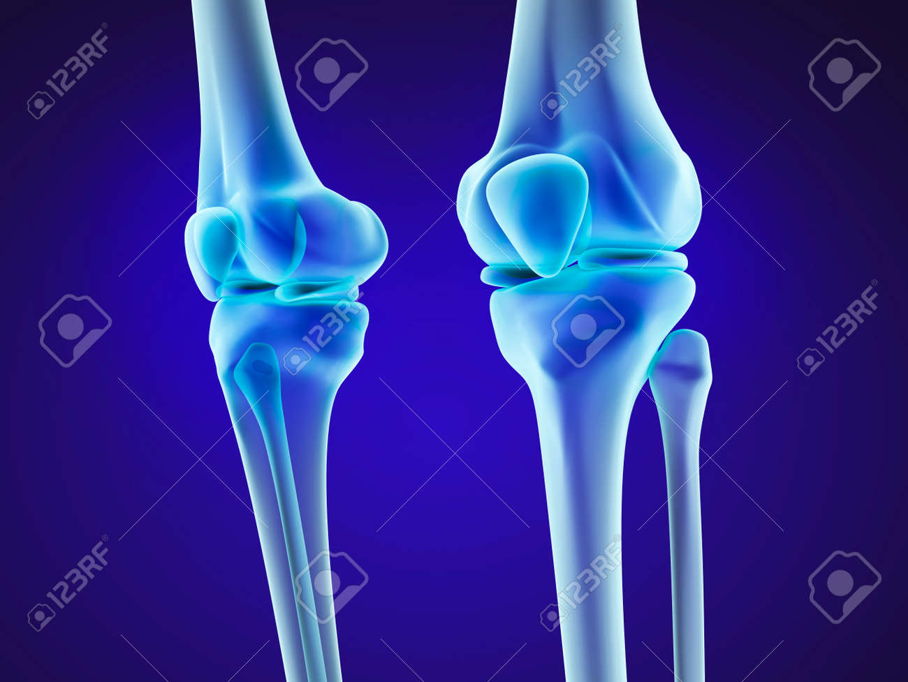 Knee Anatomy Xray View Medically Accurate 3d Illustration Stock