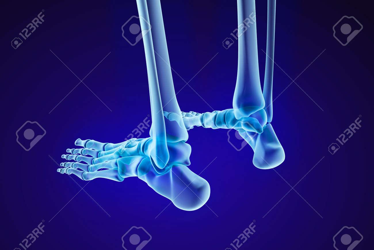 Esqueleto Humano: Los Pies Del Esqueleto. Ilustración Médica Precisa ...