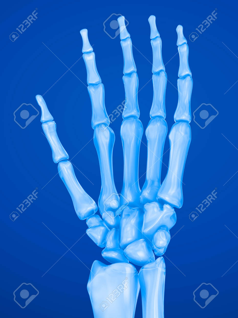 Human Wrist Anatomy Xray View Medically Accurate 3d Illustration