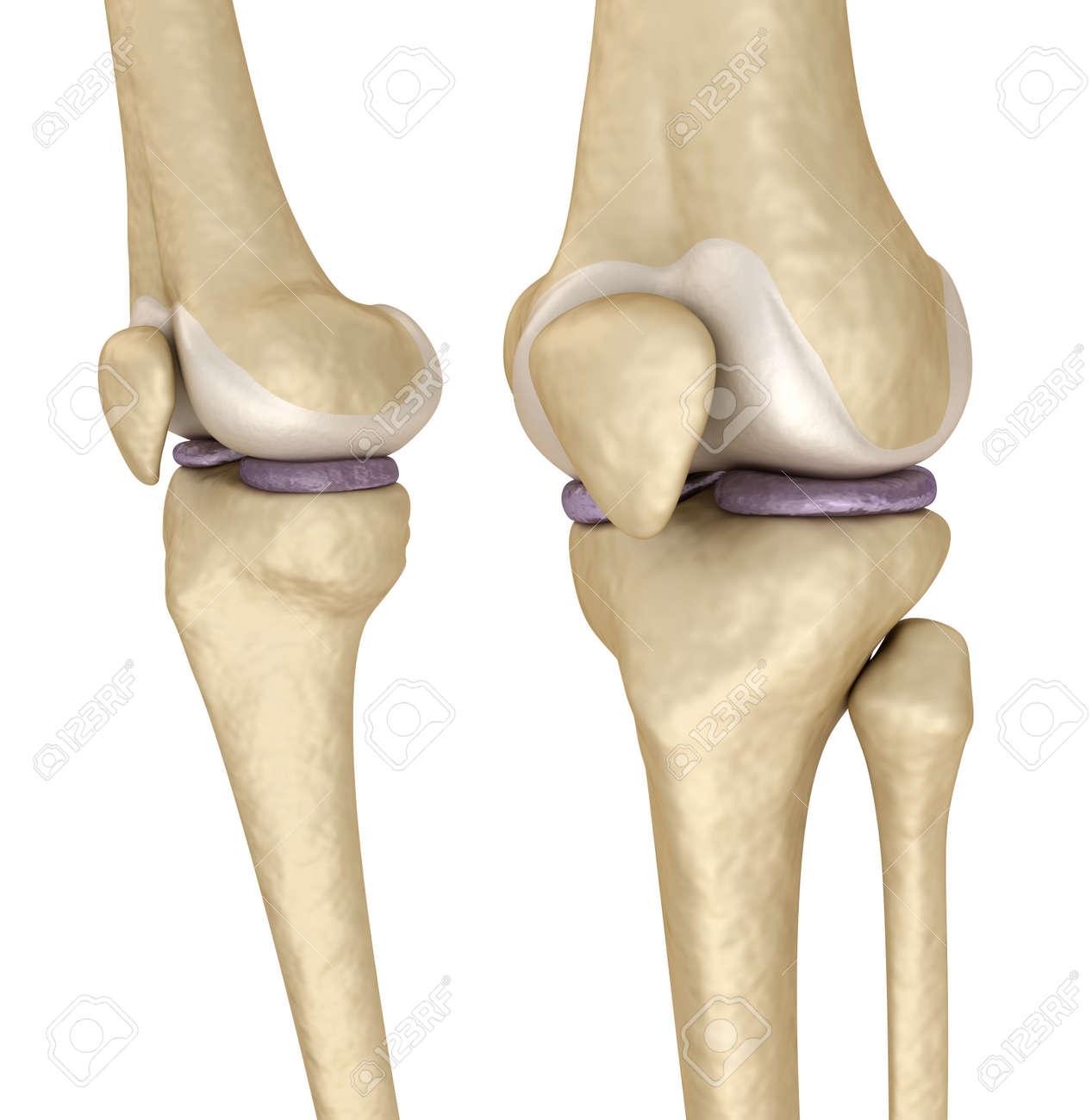 Ungewöhnlich Anatomie Des Hinteren Knie Fotos - Menschliche Anatomie ...