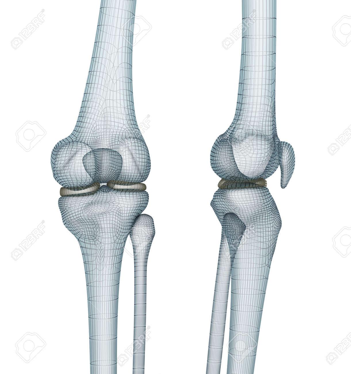Kniegelenk Anatomie. Ärztlich Genaue Draht 3D-Darstellung ...