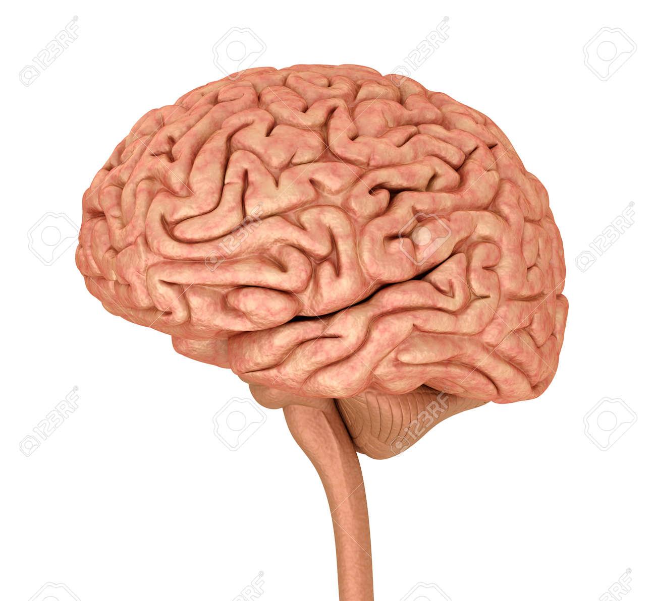 stock illustration Brain Computer Interface Diagram