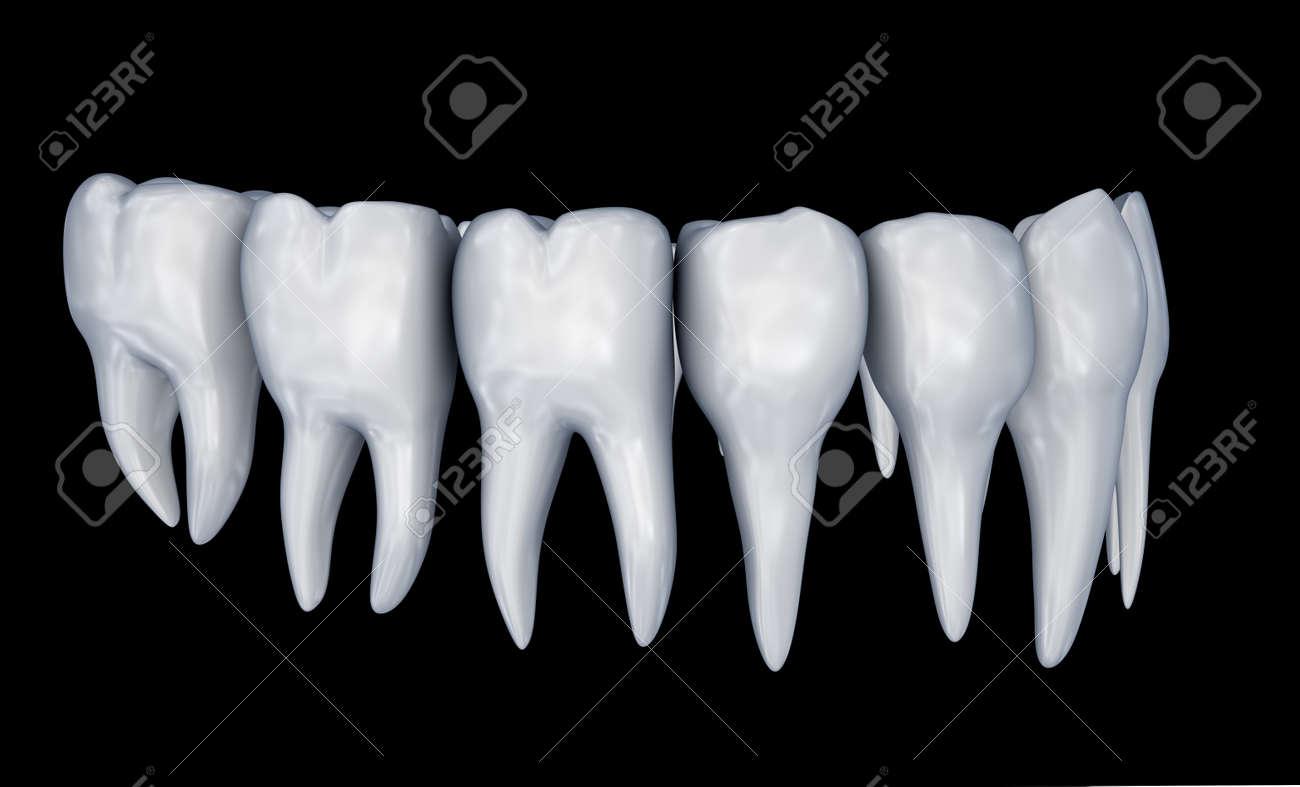 Dientes Humanos 3d Instalación. Anatomía De La Odontología ...