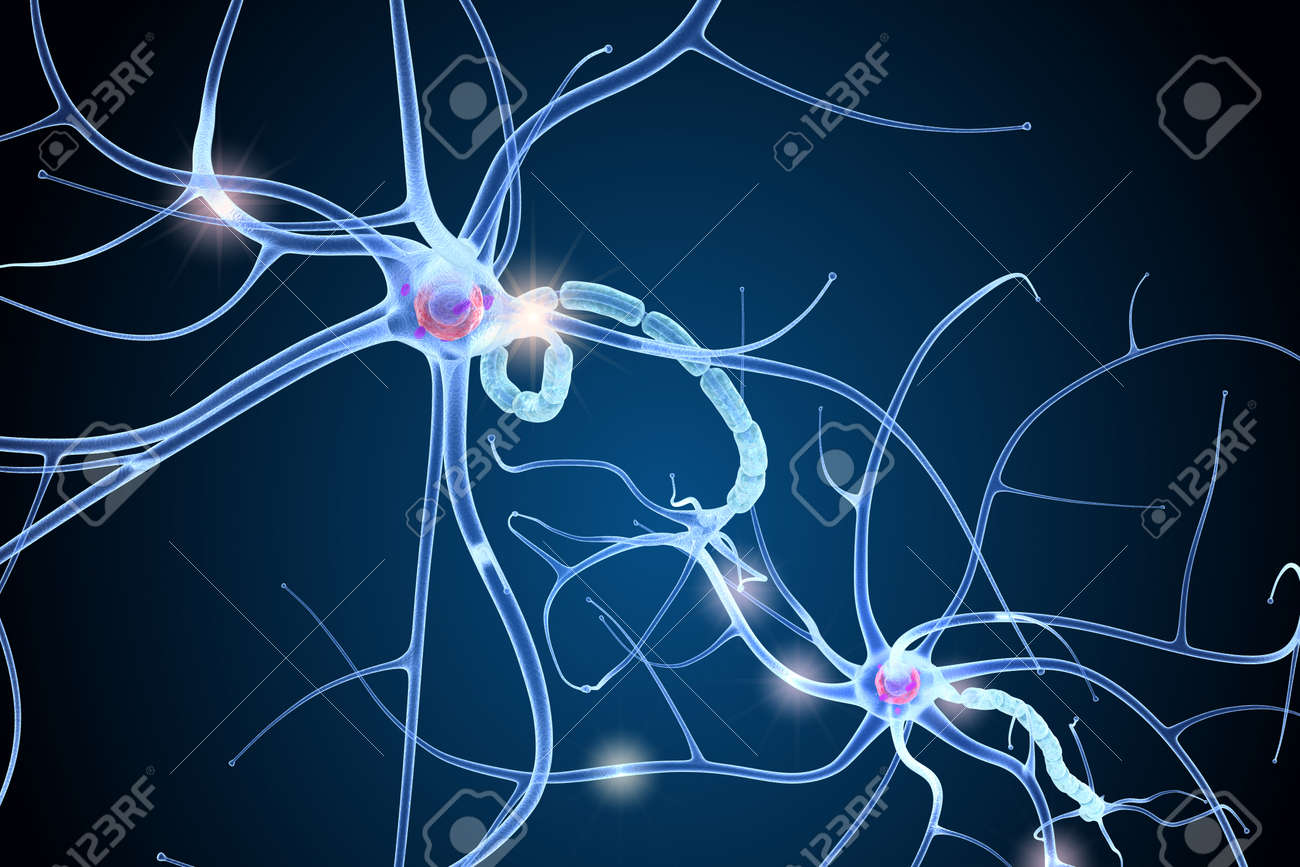 Nerve Cell Anatomy In Details. 3D Illustration Stock Photo, Picture ...