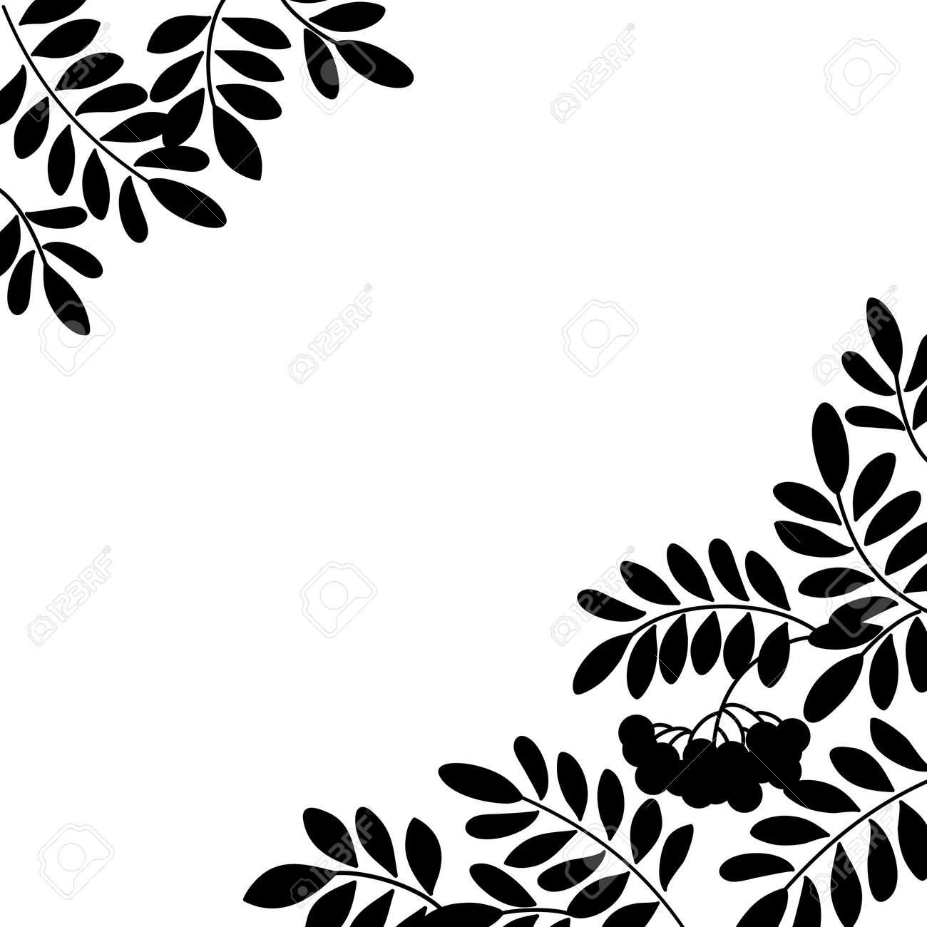Black and white background, isolated silhouette of rowanberry branches and berries Vector - 19628018