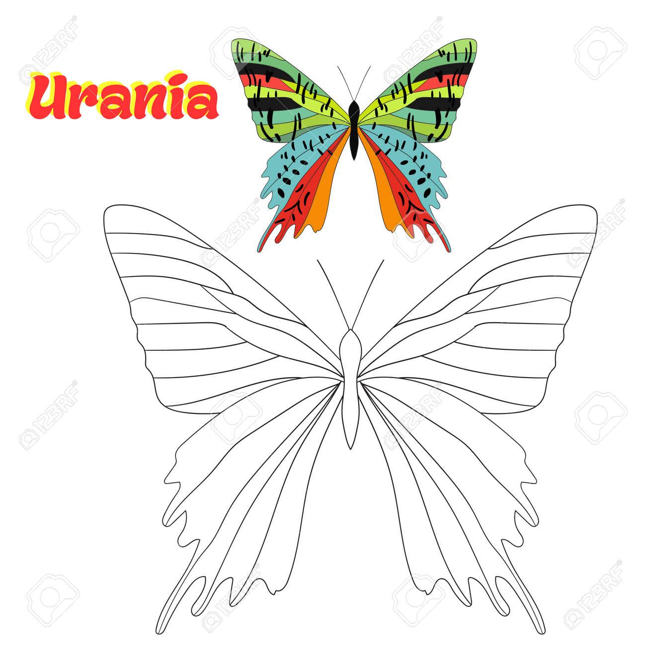 Juego Educativo Para Niños Para Colorear Libro Mariposa Bosquejo De