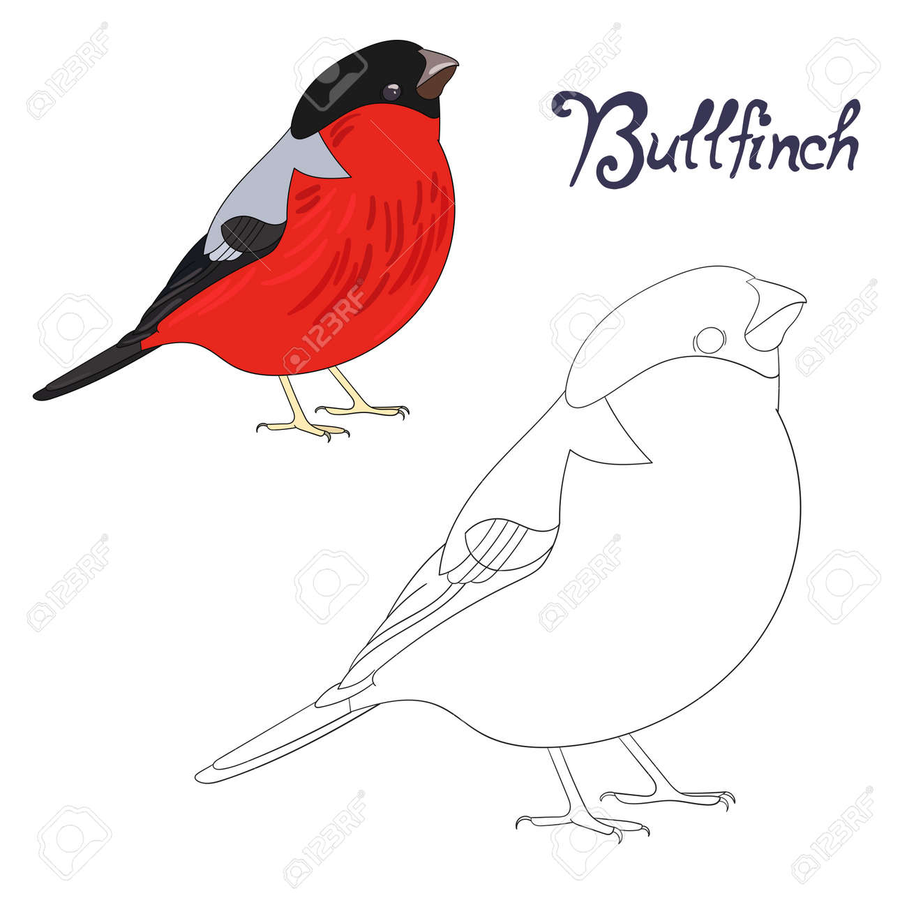 Educational Game Coloring Book Bullfinch Bird Cartoon Doodle Hand Drawn Vector Illustration Stock